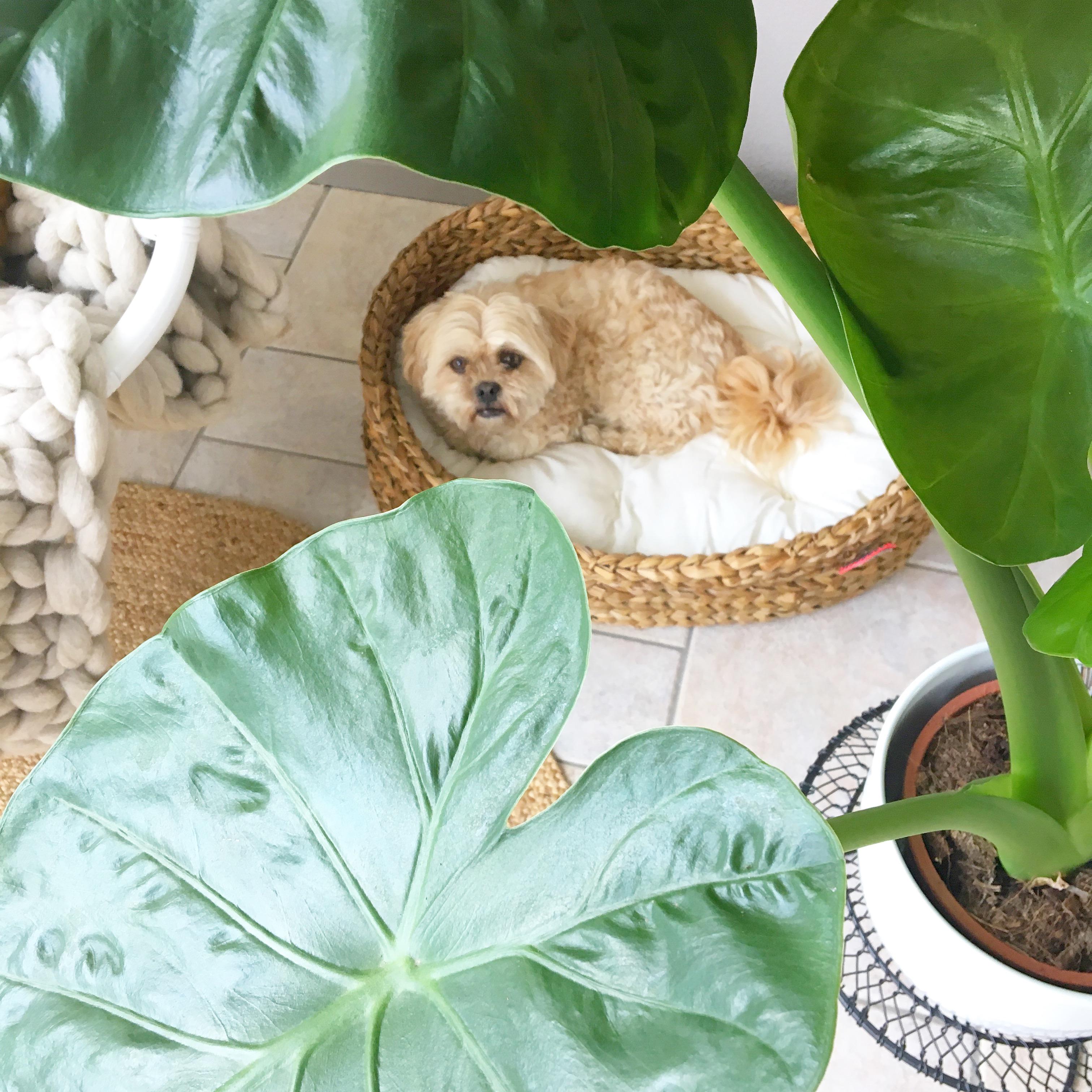 hondenmand yoshiko mandenhuys