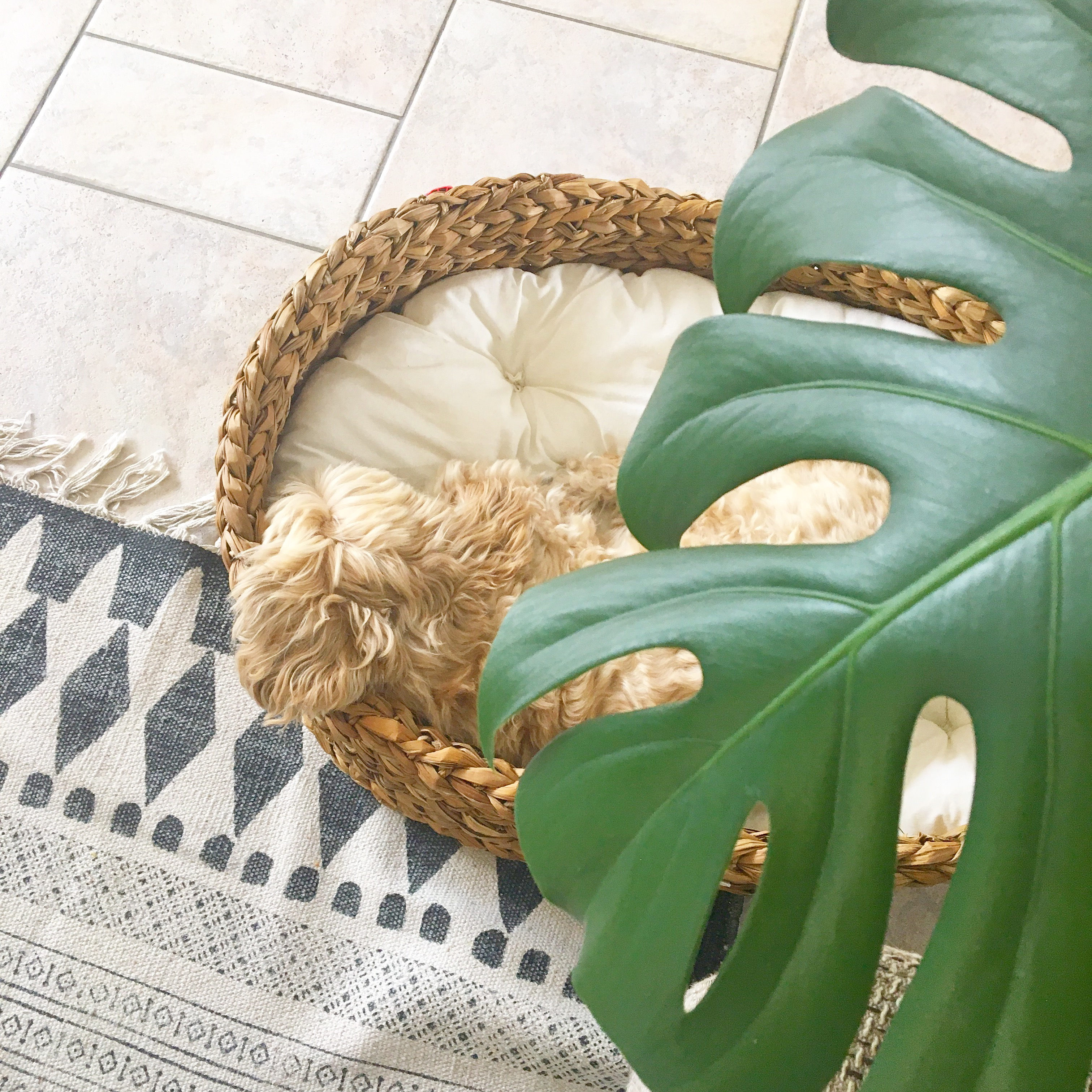 hondenmand yoshiko mandenhuys gangni