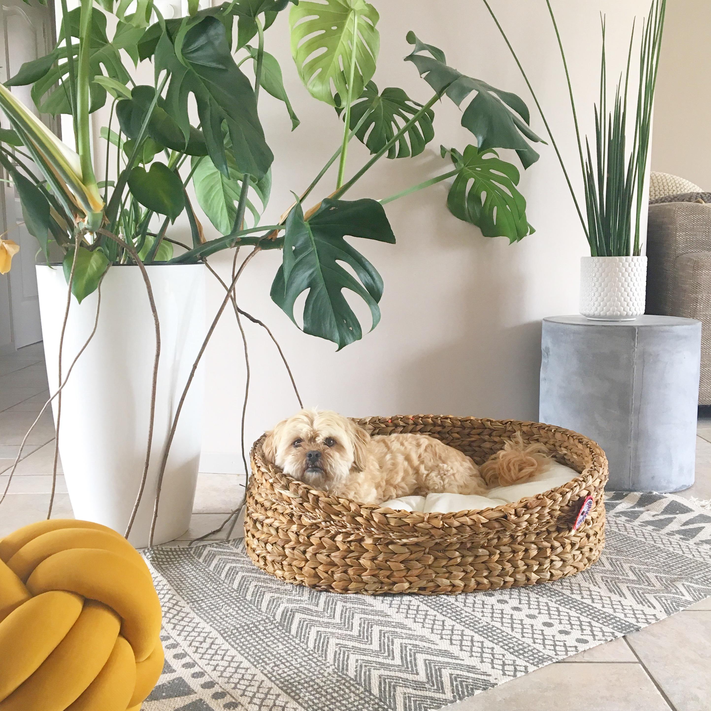 hondenmand mandenhuys