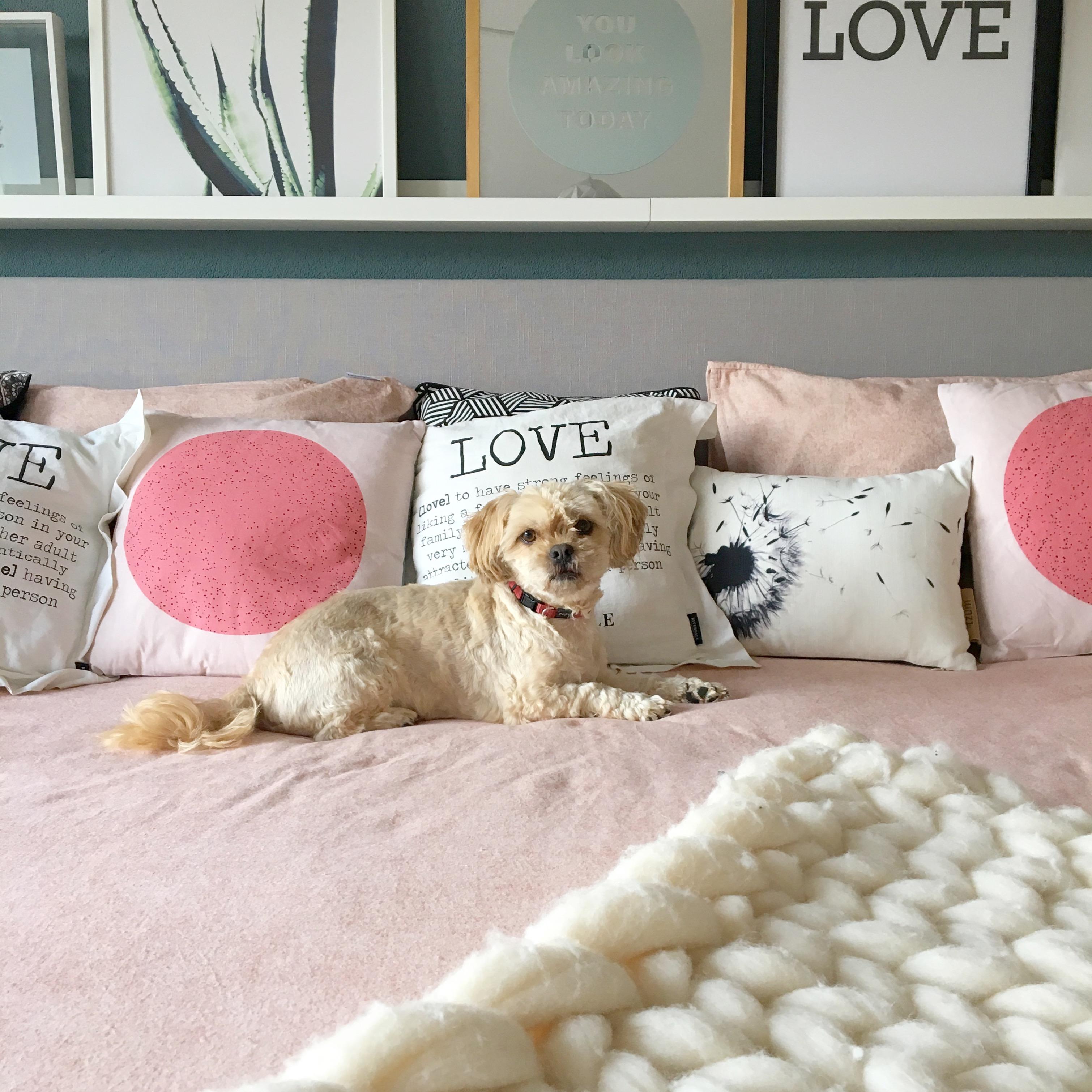shihtzu op bed roze