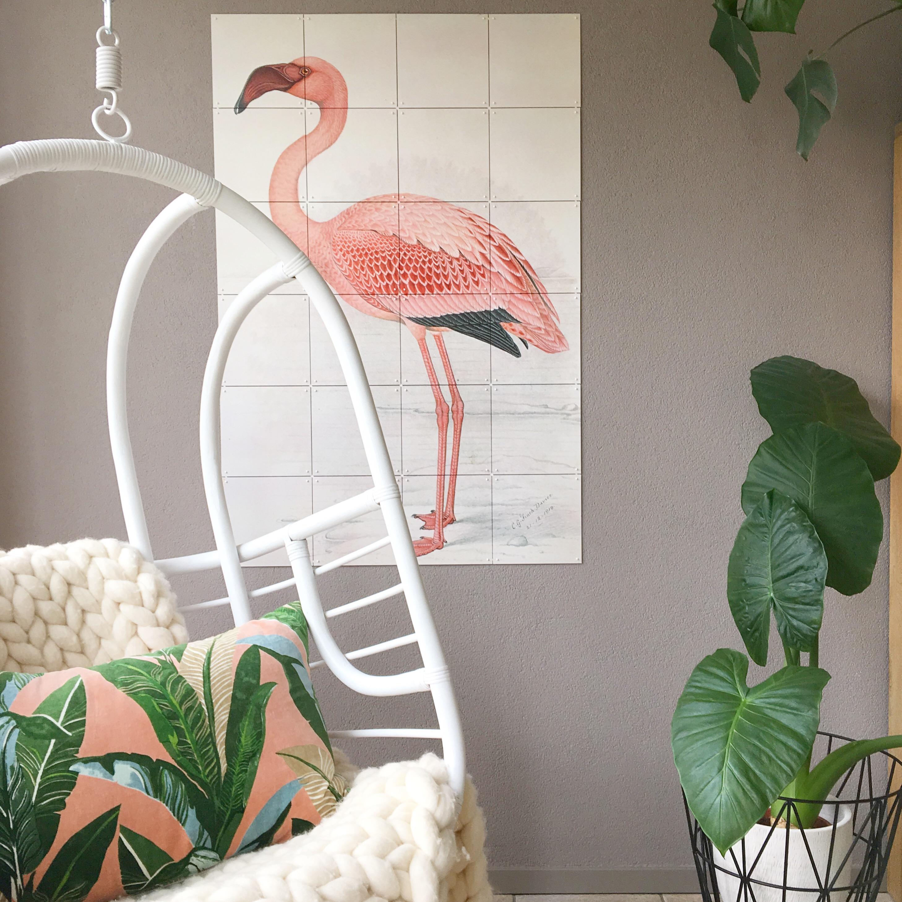 flamingo ixxi