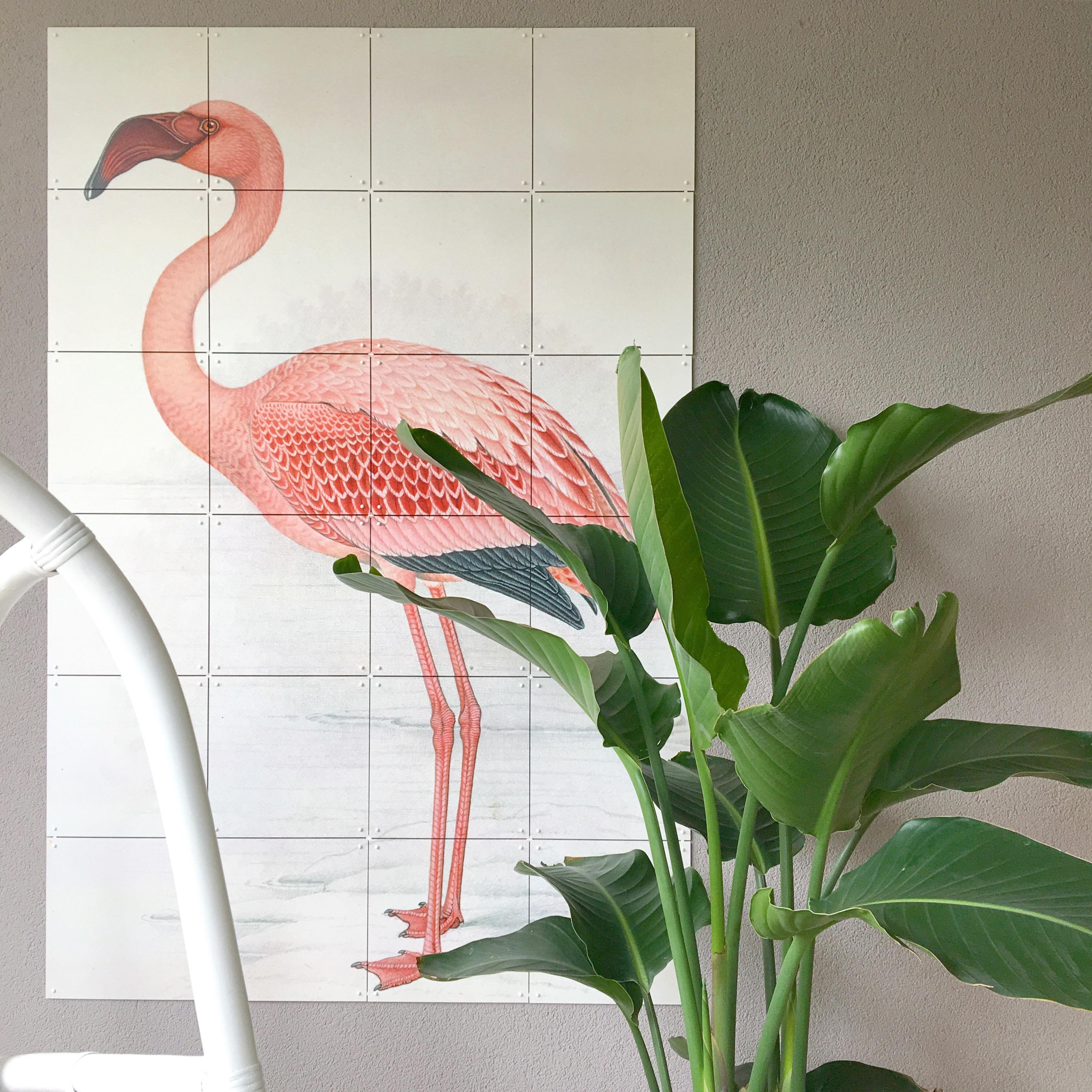 flamingo ixxi strelitzia nicolai