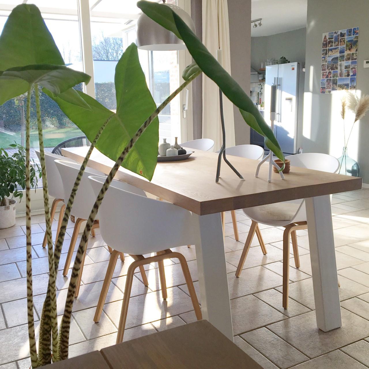 nieuwe eethoek zebrina plant